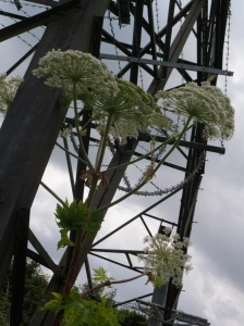 Hogweed and Pylon