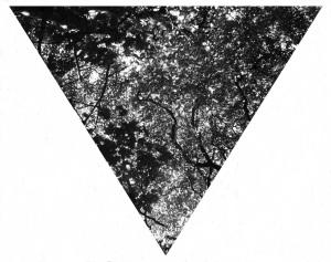 Branch Triangle