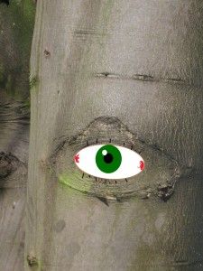 The Eye Opening in the Wood