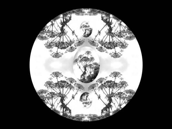 hogweed-meditation-2